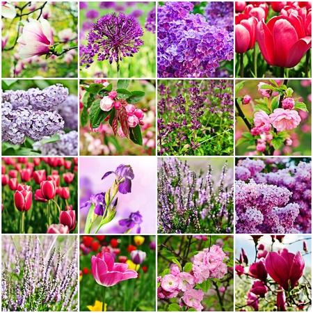 보라색 꽃 콜라주