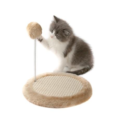 gato jugando: Gatito que afilar las garras Foto de archivo