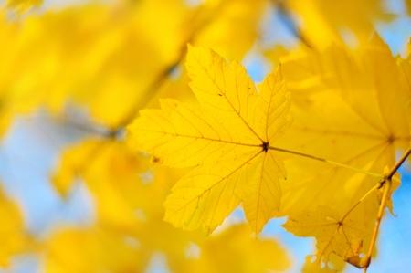 Autumn background Stock Photo - 15217447