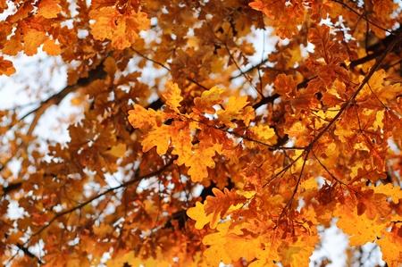 Autumn background Stock Photo - 15217833