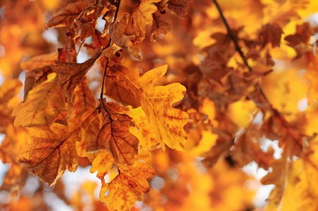 Autumn background Stock Photo - 15217777