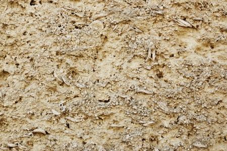 coquina: Coquina textura