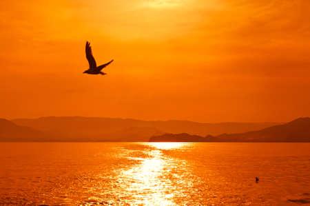 Sunset on the sea Stock Photo - 16550456