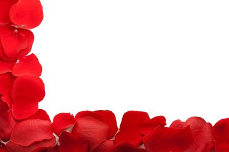 Rose petals frame