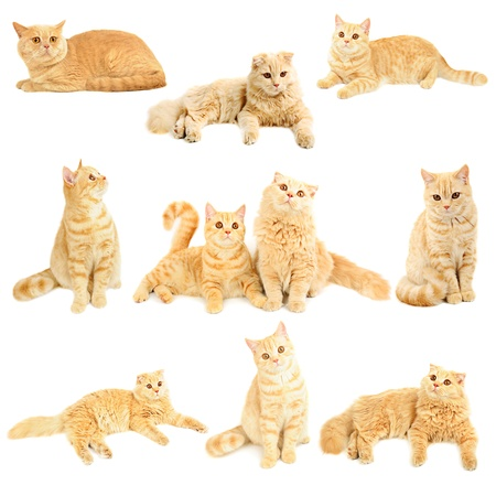 Cossaise collection cats Banque d'images - 17696922