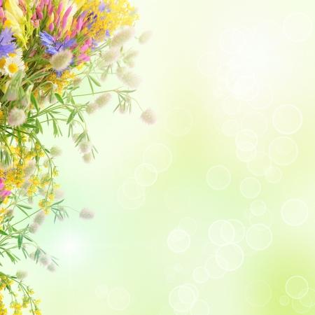flowers bokeh: Summer flowers