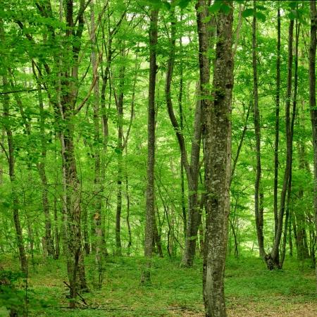 산 숲 스톡 콘텐츠