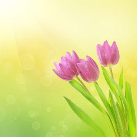 Flores de tulip?n Foto de archivo - 19535843