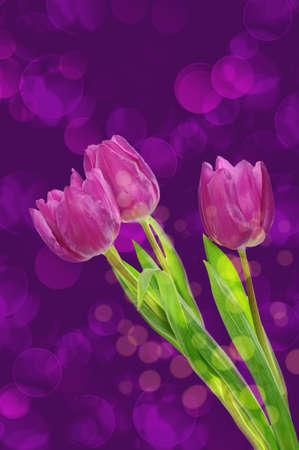 Tulip flowers background photo