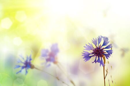 Bouquet of cornflower flowers  with bokeh and copy space,  floral abstract background photo