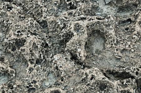 coquina: Textura de la vieja coquina (piedra caliza) pared marr�n