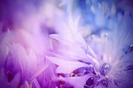 Floral zachte tedere achtergrond cornflowerdefocused blauwe verse s macro uit