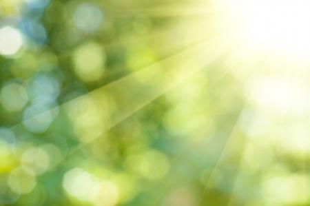 태양 광선 녹색과 노란색 톤의 자연 야외 bokeh 배경 스톡 콘텐츠