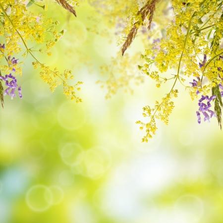 Boeket van de zomer weide bloemen met bokeh en kopieer ruimte, bloemen achtergrond Stockfoto