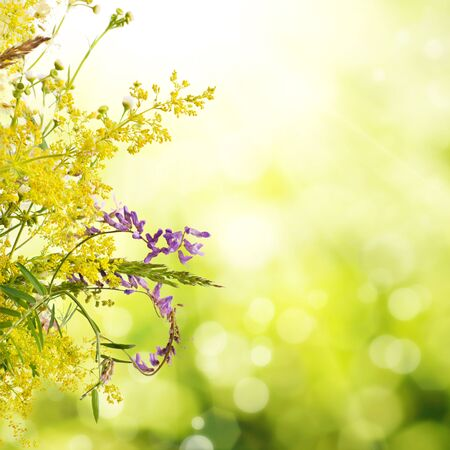 Bouquet of summer meadow flowers  with bokeh and copy space,  floral background Banco de Imagens