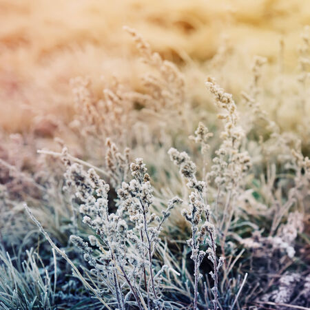 Frozen meadow flower, floral vintage  photo
