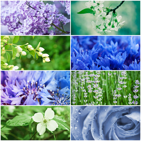 Collage from many images of different colorful green and blue flowers, floral natural background photo