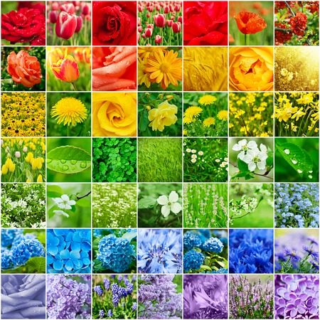 Collage from many images of different colorful flowers photo