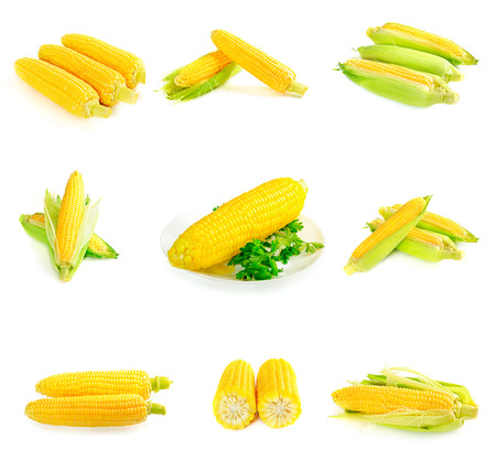 Set from six images with corn cobs photo