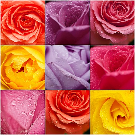 Collage from rose flowers , natural floral background photo