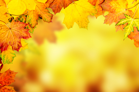 Frame from vivid colorful autumn leaves, natural seasonal background photo