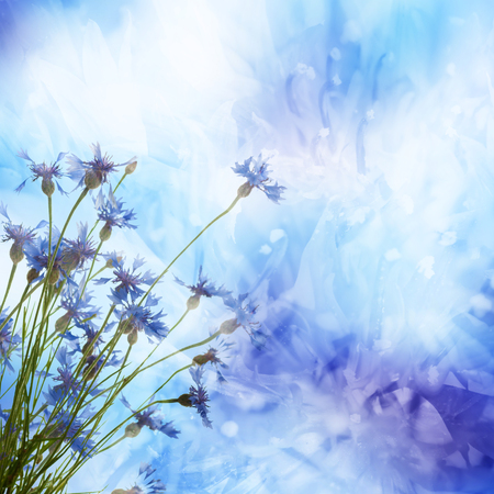 Bouquet of cornflower flowers  with bokeh and copy space,  floral abstract background Reklamní fotografie