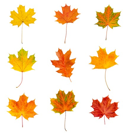 Collection from many colorful dry autumn leaves, isolated on white photo