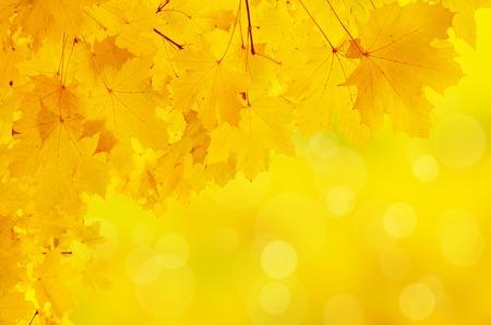 hojas secas: Cap�tulo de las hojas de oto�o de colores vivos, fondo natural de temporada