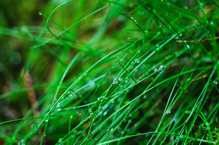 Droplets of dew on the green grass photo