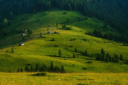 Carpathian mountain landscape with tree photo