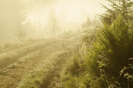 Foggy morning  landscape photo
