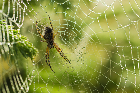 Large spider in the web photo