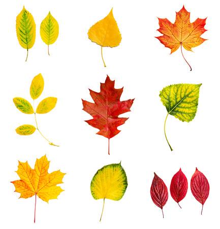Feuilles de l'automne ensemble Banque d'images - 30361728