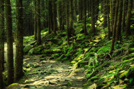 Dense green forest photo