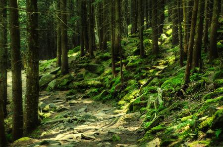 Dense green forest photo