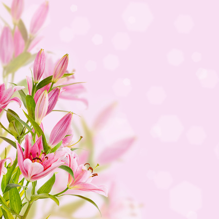 Pink lilies background Reklamní fotografie - 31282902