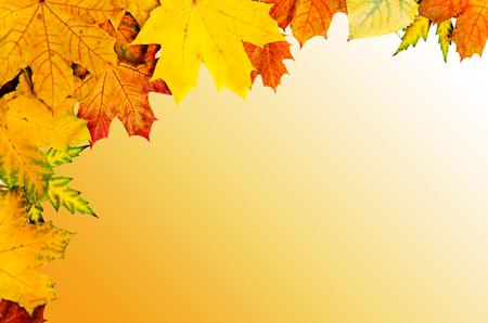 leaves frame: Autumn leaves frame
