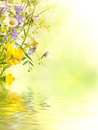 flowers bokeh: Summer flowers background