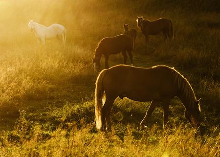 Magic herd photo