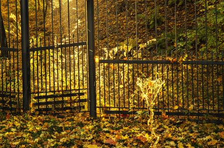 Autumn sunny park photo