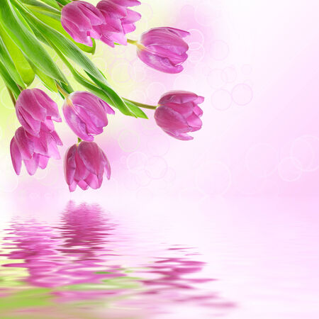 Tulip flowers background photo