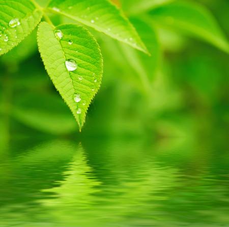 medio ambiente: Hoja verde