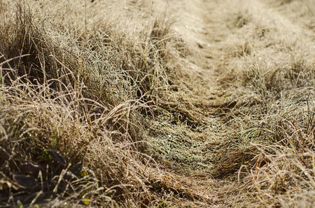 meadow  grass: Congelados hierba prado Foto de archivo