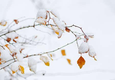 medow: Under the snow