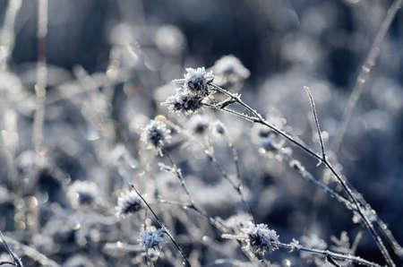 medow: Frozen meadow flower