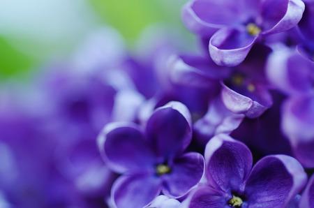 Macro beeld van de lente lila paarse bloemen