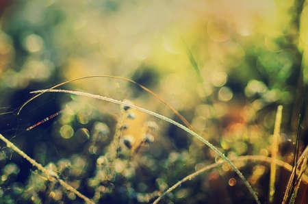 medow: Frozen meadow plant