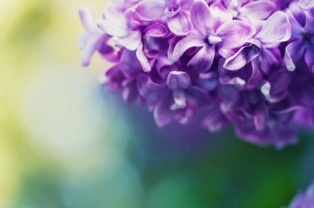 nude nature: Lilac flowers background
