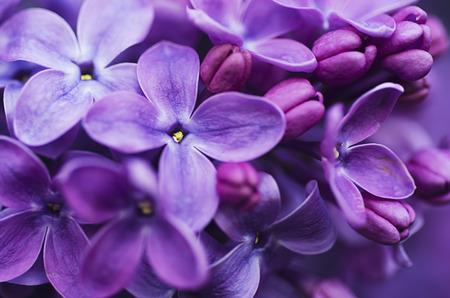 Lila flores de fondo Foto de archivo - 38344337