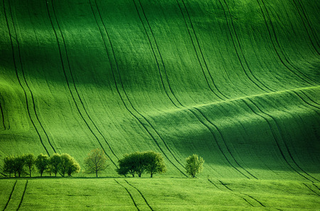 countryside landscape: Rolling sunny hills with fields  and trees suitable for backgrounds or wallpapers, natural seasonal landscape. Southern Moravia, Czech republic